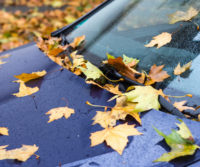 autumn leaves on a car